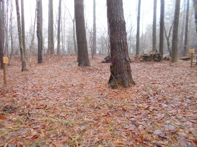 濡れた林床