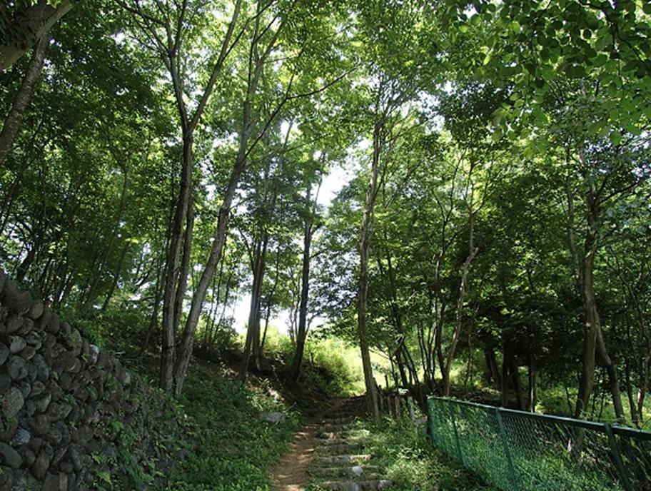 5月~6月の広葉樹の森