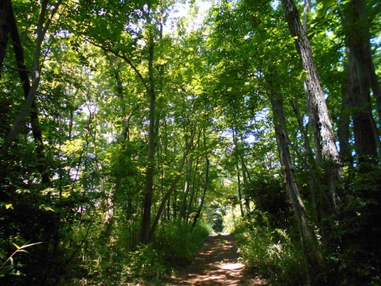 夏の森 樹木も毎日呼吸をしています。