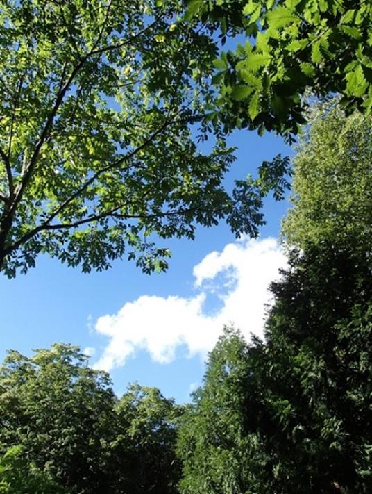 林冠の合間から見える青空
